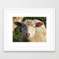 lamb Framed Art Prints featuring lamb by OllieThatsMe