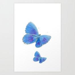 Adonis Blue Butterflies Art Print