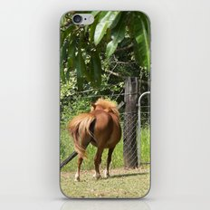 Beautiful miniature horse mare iPhone & iPod Skin