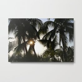 Dominican Palm Trees Metal Print