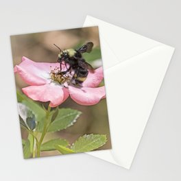 Bumble Bee on a Rose Stationery Cards