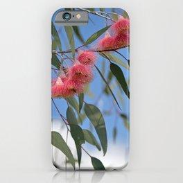 Eucalyptus Silver Princess Blossoms III iPhone Case