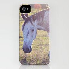 Star Horse iPhone (4, 4s) Slim Case