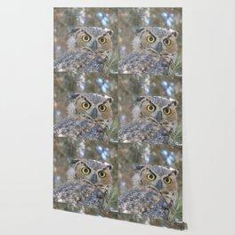 Young Owl at Noon Wallpaper