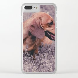 UV Color Photo Dog Dachshund Closeup on Nature Clear iPhone Case