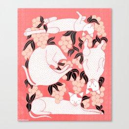 Timor, The Cat Canvas Print