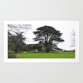 West Lawn, Malahide Castle Art Print