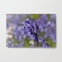 In Among the Bluebells Metal Print