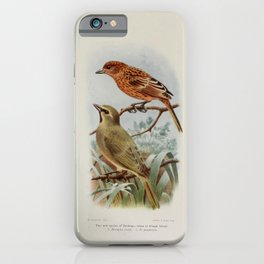 nesospiza jessiae, Gough Finch, nesospiza goughensis25 iPhone Case