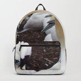 Northern gannet embrace Backpack