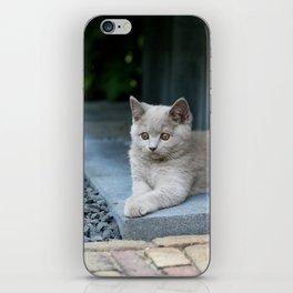 Bikkel the cat ! iPhone Skin