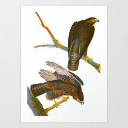 Black Warrior Bird Art Print