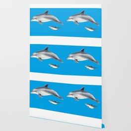 Bottlenose dolphin blue background Wallpaper