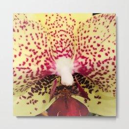 Meyer Lemon-Color Orchid With Elegant Scarlet Spots Metal Print