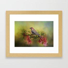 Elegant Finch Framed Art Print