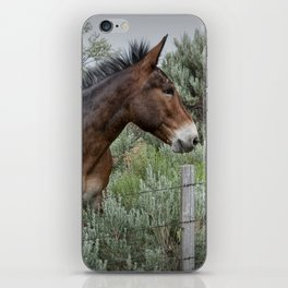 Mule in Wyoming iPhone Skin
