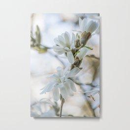 Exquisite Spring Gift    Magnolia Blossom Metal Print