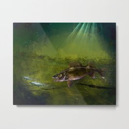 Walleye, the Chase (walleye fishing art) Metal Print