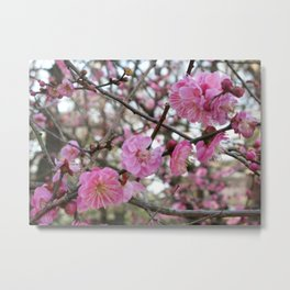 Pink Cherry Blossom / Sakura / サクラ(桜) Metal Print