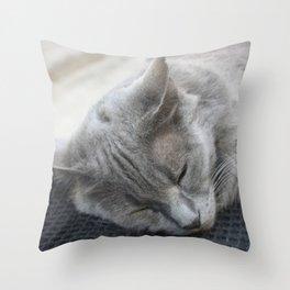 Beautiful Grey Cat Sleeping Throw Pillow