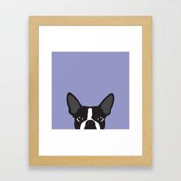 Boston Terrier Violet Framed Art Print