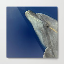 Bottlenose dolphin portrait Metal Print