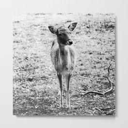 Young Deer Metal Print