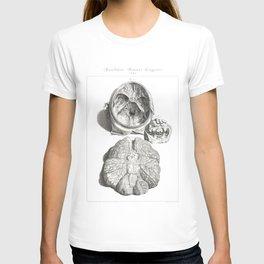 Human Anatomy Art Print CEREBELLUM CERVICAL SPINE Vintage Anatomy, doctor medical art, Antique Book T-shirt