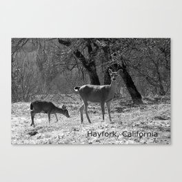 The doe and young buck... Canvas Print