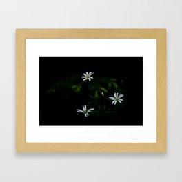 Anemone nemorosa Framed Art Print