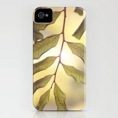 sun it rises iPhone (4, 4s) Slim Case