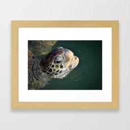 Sea Turtle - Grand Cayman Framed Art Print