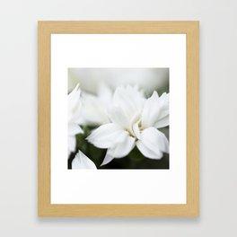 Snow White Flowers on a Dark Background #decor #society6 #buyart Framed Art Print