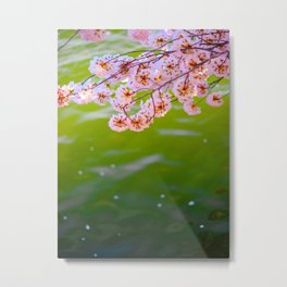 Beautiful Japanese Pink Cherry Blossom Over A colorful Green Garden Pond Petals Drifting Away Metal Print