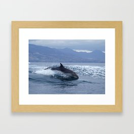 Wild and free bottlenose dolphin Framed Art Print