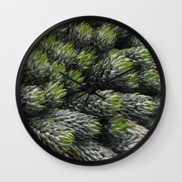 Haworthia coarctate - botanical photography Wall Clock