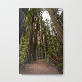 Redwood Forest Adventure VII - Nature Photography Metal Print