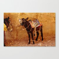 donkey Canvas Prints featuring Donkey by Noelle Abbott