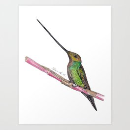 Sword Billed Humming Bird Art Print