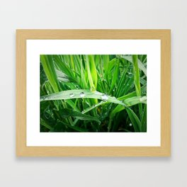 green grass Framed Art Print