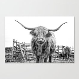 Highland Cow in a Fence Black and White Canvas Print