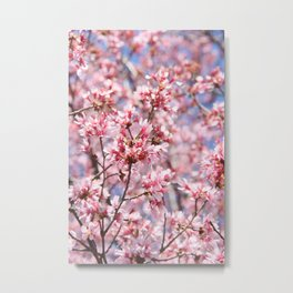 Cherry Blossom Blooms for Spring Metal Print