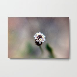 une fleur 1  Metal Print
