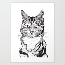 Cat line drawing portrait black and white illustration Art Print