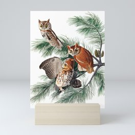 Little Screech Owl by John James Audubon Mini Art Print
