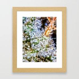 Gorilla Glue Trichomes Strain Indoor Hydro Private Reserve Buds Framed Art Print