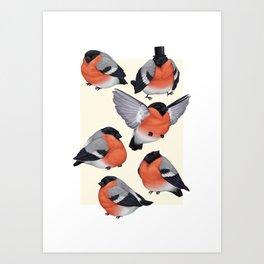 Eurasian Bullfinches Art Print