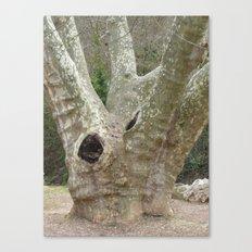 Amazing Tree Trunk Canvas Print