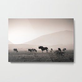 Herd of Wildebeest in South Africa Metal Print
