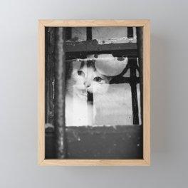Cat at the window Framed Mini Art Print